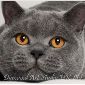 Cat Sample Image