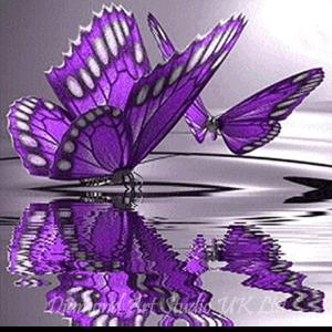 Reflection Butterflies Image