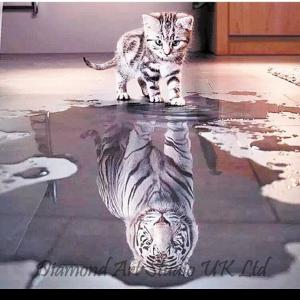 Cat Tiger Reflection Image