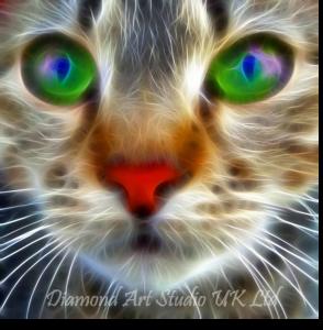 Vibrant Cat Image