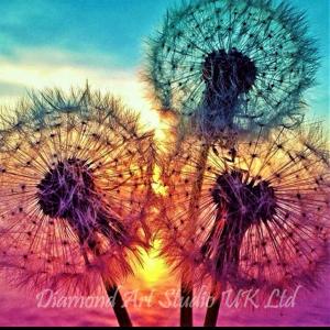 Sunset Dandelions Image