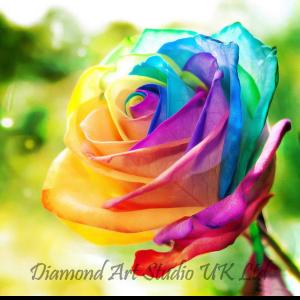 Rainbow Rose Image