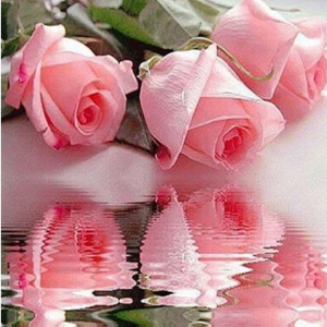 Rose Reflections Image