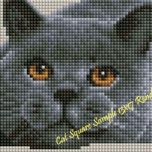 Cat Sample Rendering