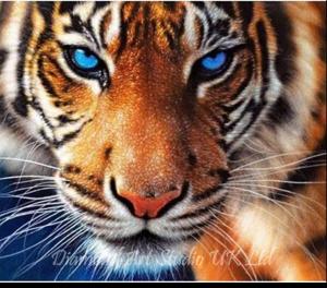 Blue Eyed Tiger Image