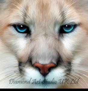 Cougar Gaze Image