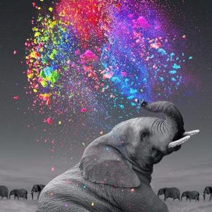 Rainbow Elephant Image