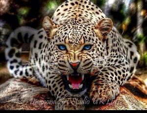 Snarling Jaguar Image