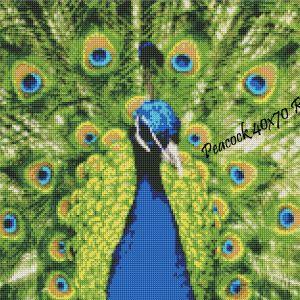 Peacock Round Rendering