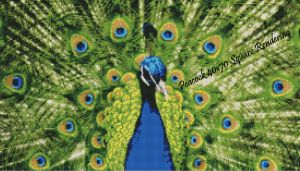 Peacock Square Rendering