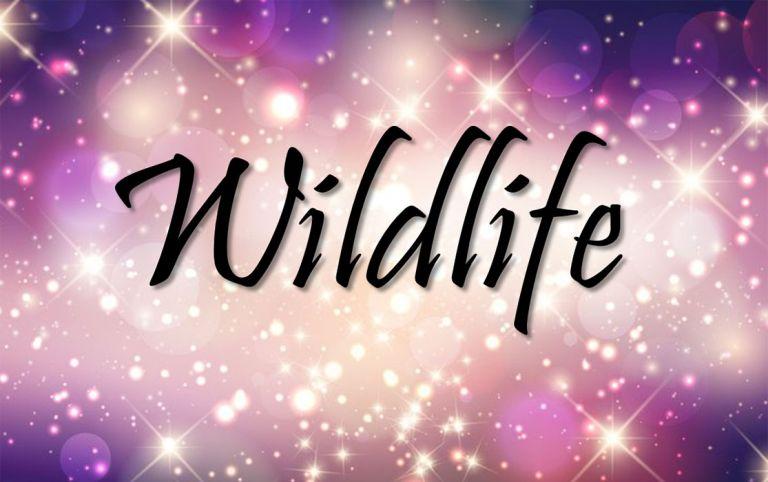 Wildlife Title